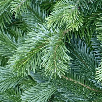 Weihnachtsmarkt, Advent, weihnachtliche Vorfreude, Geschenke, Gluehwein, Punsch, Kekse, Ausstellung, Weihnachtsbaum, Dekoration, Tannengruen