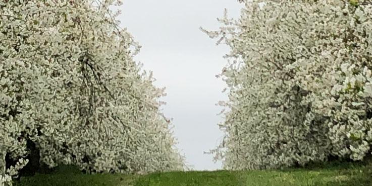 Slider Frühling
